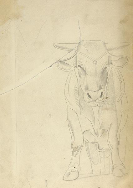 Стенберг Владимир Августович (1899–1982) «Бык». 1940-е — 1950-е. Бумага, графитный карандаш, 28×19,5 см.