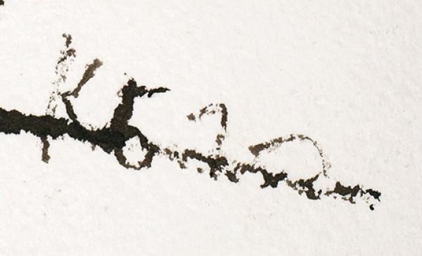 Батынков Константин Александрович (род.1959) «Ню» изсерии «Голенькие». 2010. Бумага, тушь, 42×29,6см.