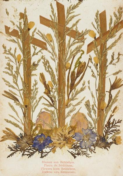 [Альбом видов игербарий] Иерусалим. Цветы ивиды Святой Земли. [Ierusalem]. Порт-Саид; Иерусалим: Ephtimios Freres, [1910-е гг.].